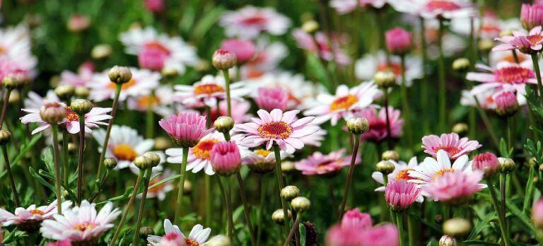 Õsz a virágoskertben